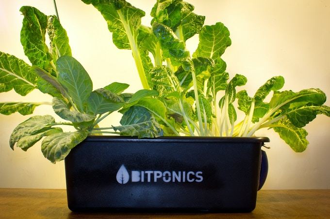 "Your reward for a $100 pledge: a ""water culture"" hydroponic system."