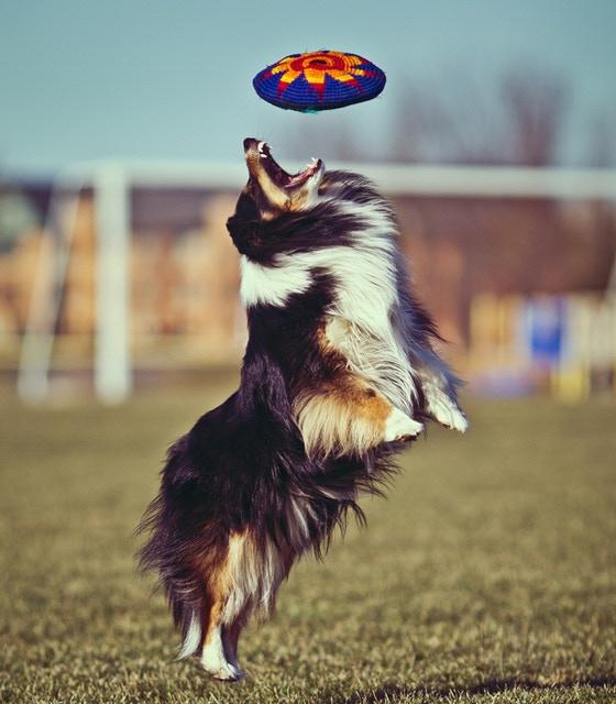 Dogs love them too - won't hurt Fido's teeth or gums.  See Dog FAQ below.