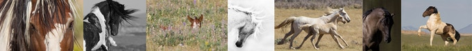 Some images from Galloping to Freedom