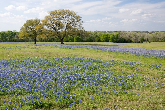 (The FoolsFest Palette. Texas Ranch Land in the Spring.)