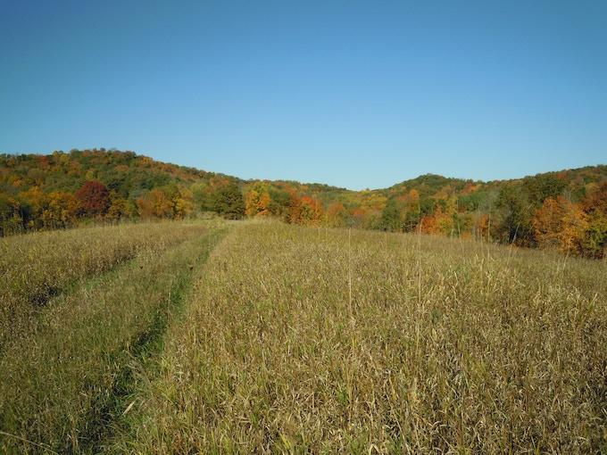 Prairie Restoration Field, Valley Ridge Preserve