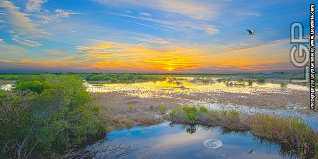 We need the Everglades to survive.