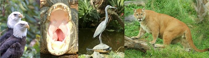 """My art promotes Wildlife Awareness & Animal Kindness"" ..lloyd"