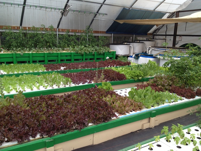 Growing Food Growing Minds Commercial Aquaponics By