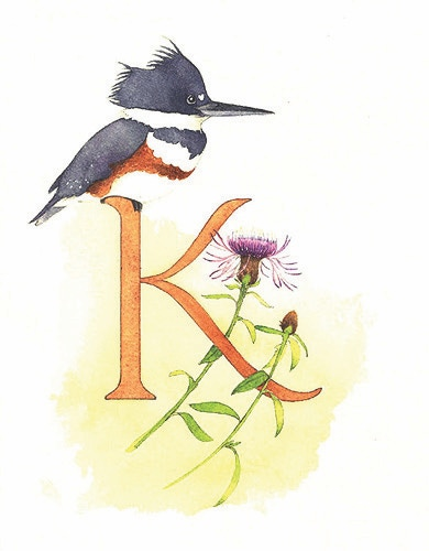 K is for Kingfisher, knowledgeable about knapweed.