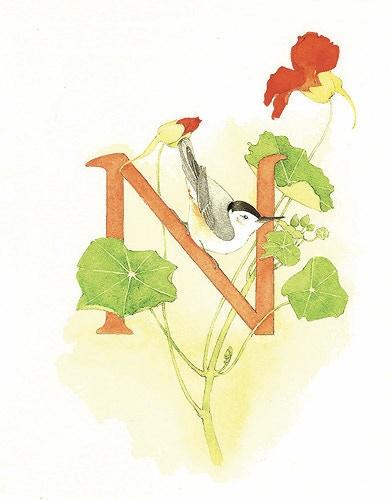 N is for Nuthatch, negotiating nasturtiums.