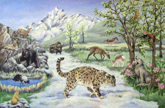 Where Snow Leopard Prowls Wild Animals Of Tibet By