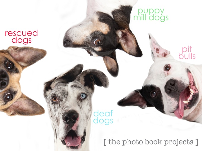 With a $20 pledge, get this adorable magnet of dogs from all 4 of Melissa's books!
