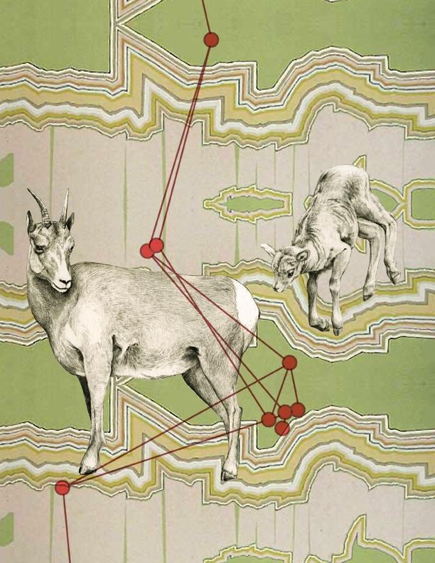 Option 3 - Lamb and Ewe in Transit