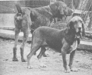Bloodhounds sniffed out the path of Florence Knoblock's killer.