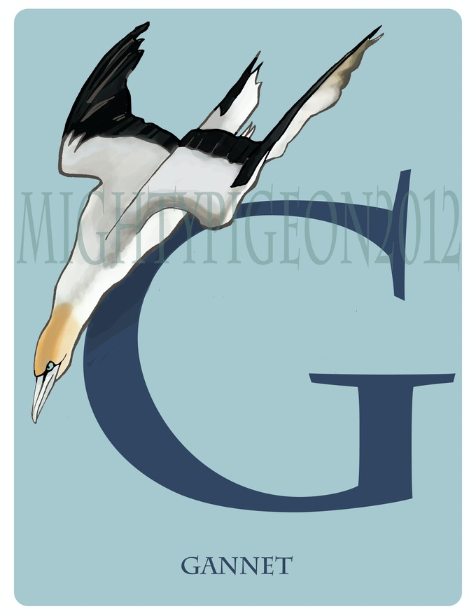 G is for Gannet
