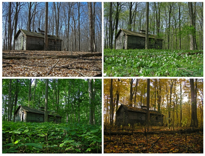 Sugar Shack, old-growth forest, Indiana, 2007