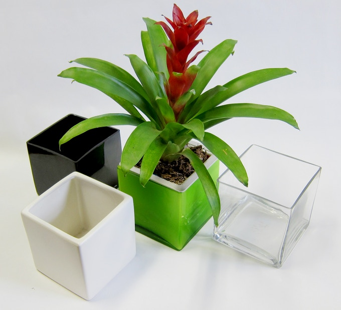"""Bluumer is compatible with 6""""x6""""x6"""" cube vases"""