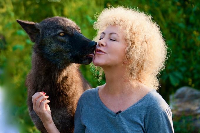 Yep, she's a wolf.....Her name is Dharma !!!