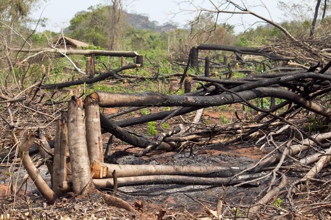 Slash and burn agriculture have removed the protection that was once given by the shade of trees, making the inscription vulnerable to the elements.