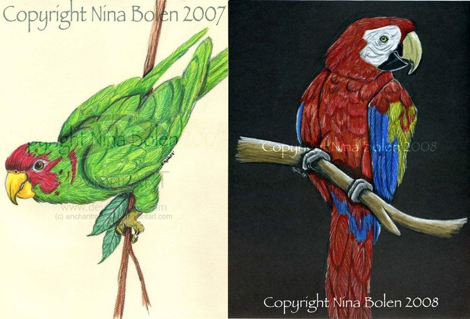 Original bird art by Nina Bolen