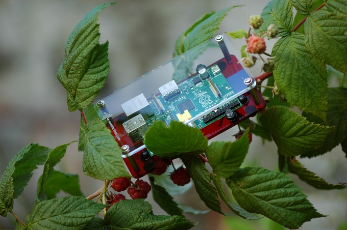Raspberry Pi mounted in a Space Station enclosure, nestled in a raspberry bush.