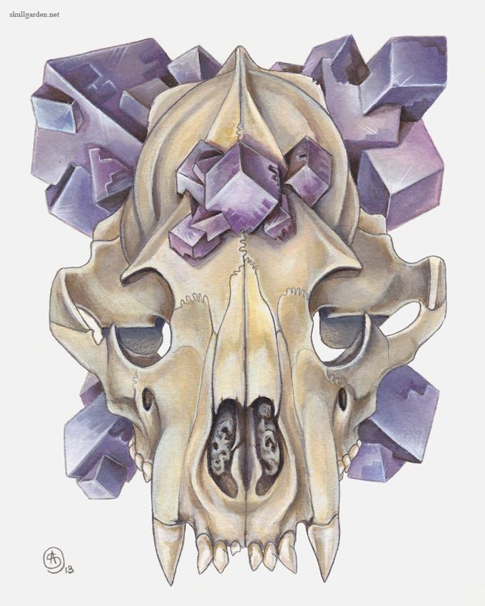Cubic Fluorite w/ Bear Skull