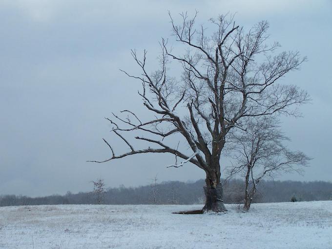 The actual devil's tree in NJ.