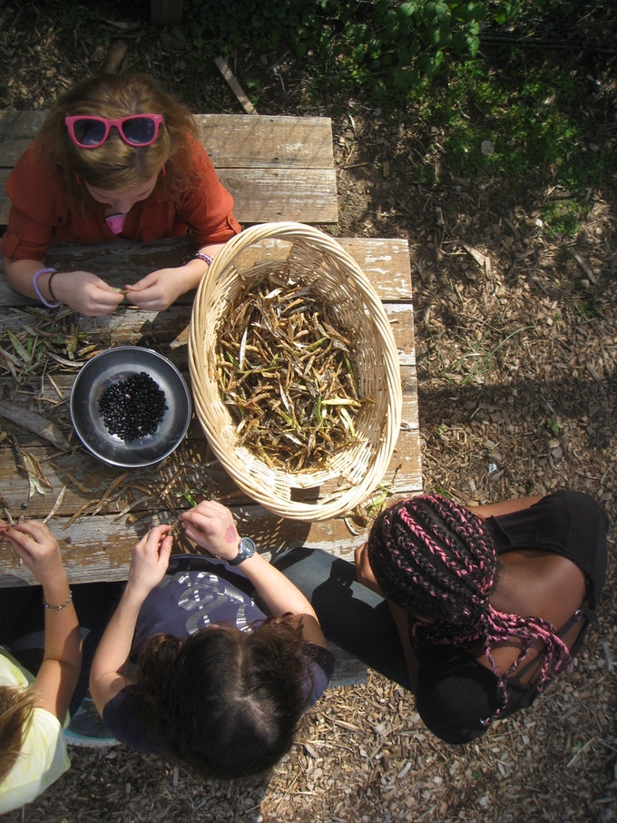 Last fall's dried black bean harvest will be planted in the garden this spring and used in our garden-to-table unit with the Family and Consumer Science class.