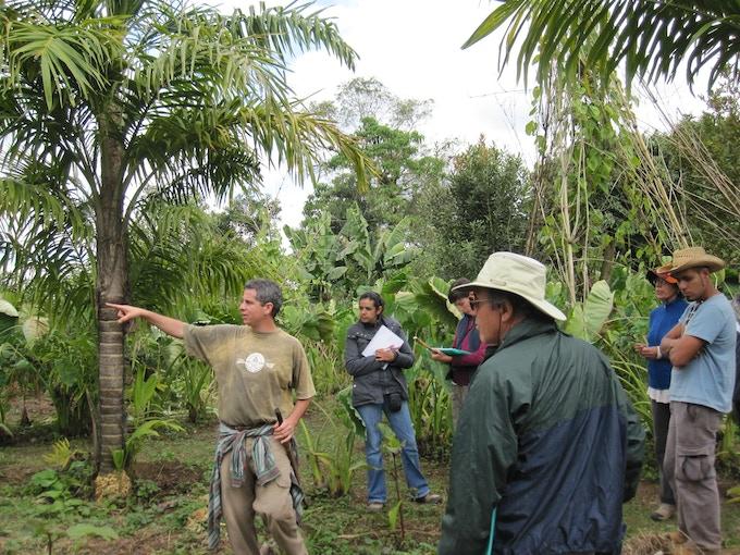 Perennial staple crop food forest at Las Canadas in Mexico: peach palm, banana, macadamia, perennial beans, air potato and more