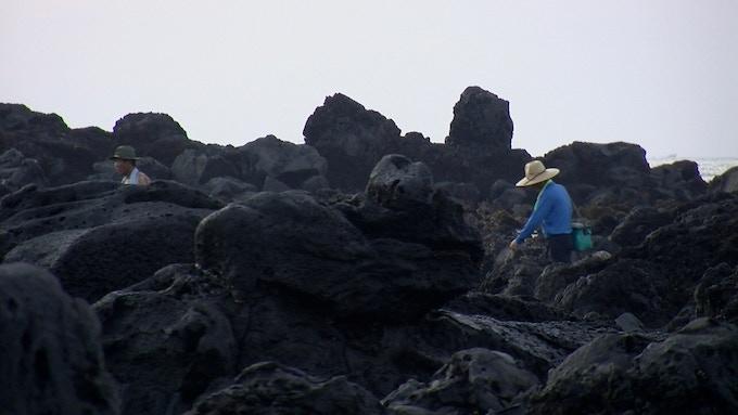Jeju coastline