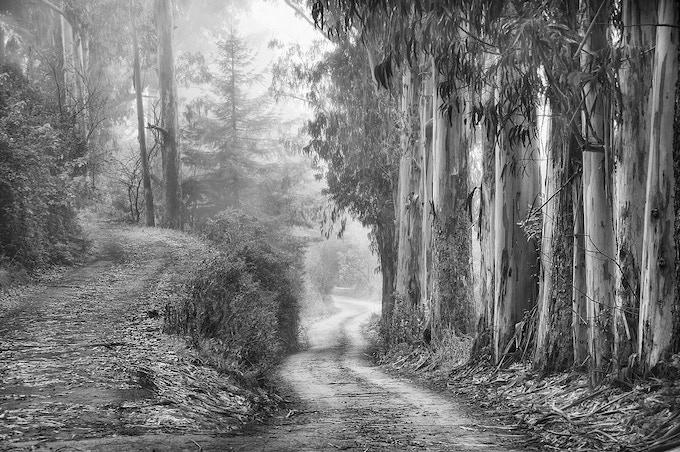 Road Less Traveled © Harold Davis