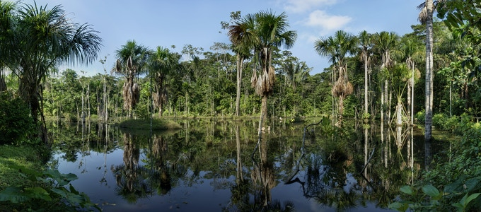 "Blackwater Swamp 12"" x 27"" panoramic (Reward level $1500)"
