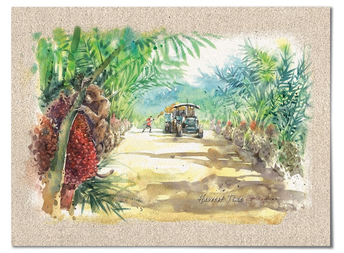"""""""Harvest Time"""" – Oil Palm Trees produce on average more than 200 kg of fruit per tree a year."""