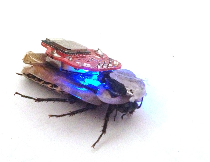 The Roboroach Control A Living Insect From Your