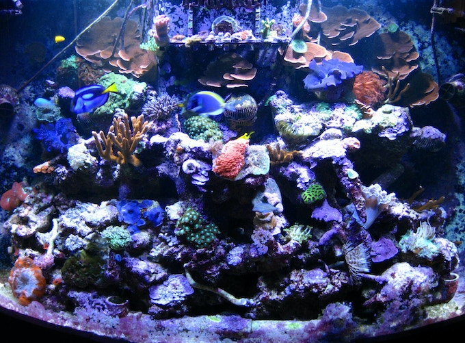 My 90 gallon reef tank that ran for over 4 years only by growing algae in the filter (no water changes either). It developed a crack at the top of the tank in 2013