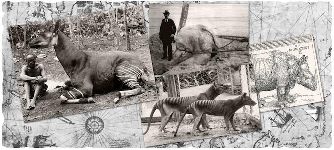 Left to Right, The Okapi, Giant Squid, Tasmanian Tiger, Rhino