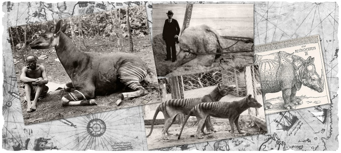 Left to Right, The Okapi, Giant Squid, Tasmanian Tiger, Rhino