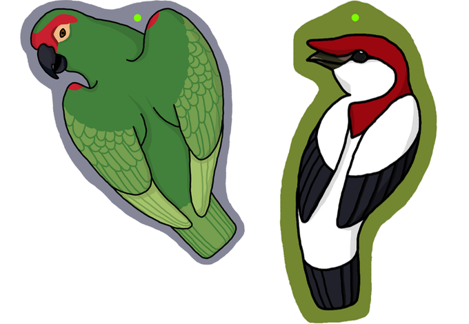 Acrylic charm designs featuring a Thick-Billed Parrot and a male Araripe Manakin. Designs by Arras Wiedorn.