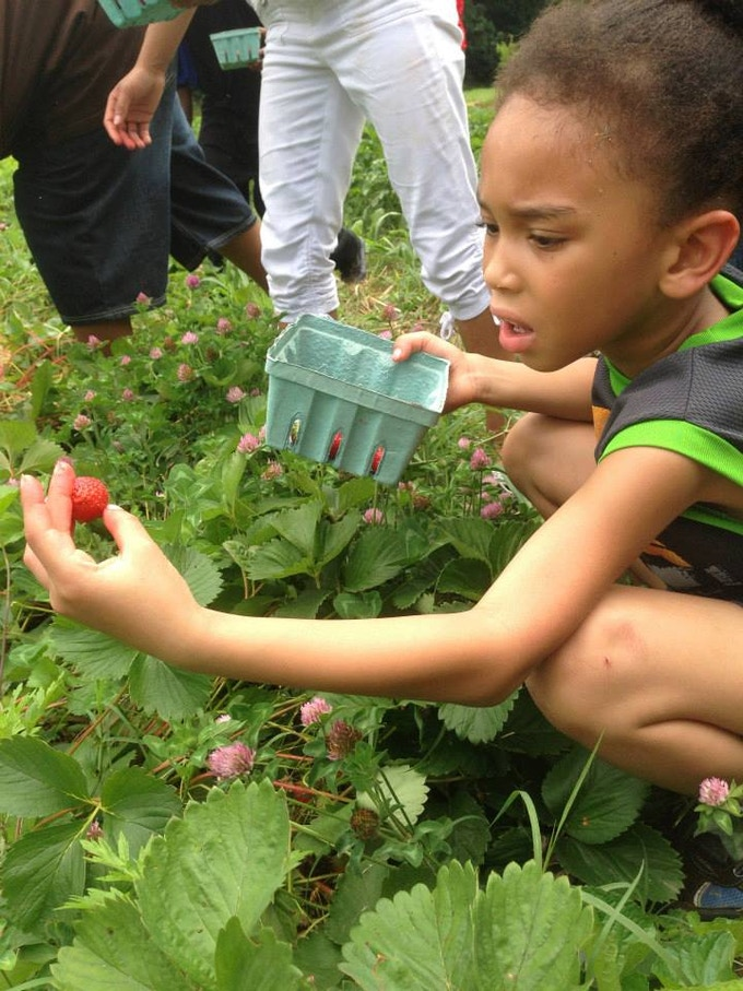Surest way to get kids eating fresh produce is getting them to grow it