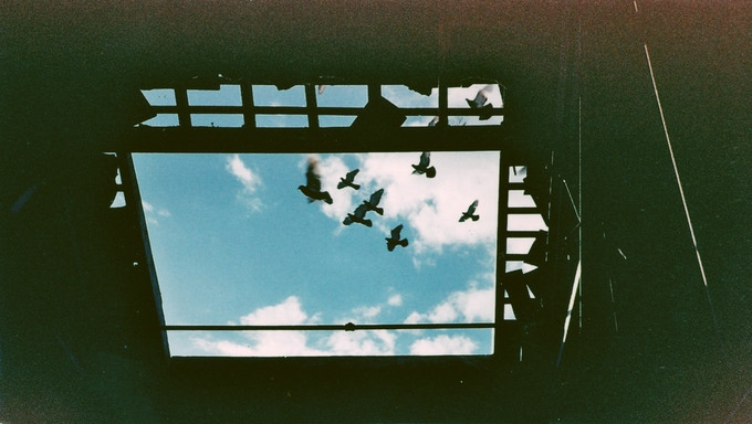 Examples of my Analogue Film photography