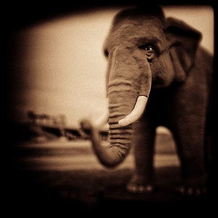 """Elephant"" -Saint Charles, Missouri (2001)"