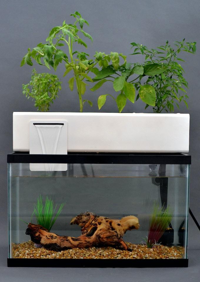 The blue green box by andrew de melo kickstarter for Petit aquarium original