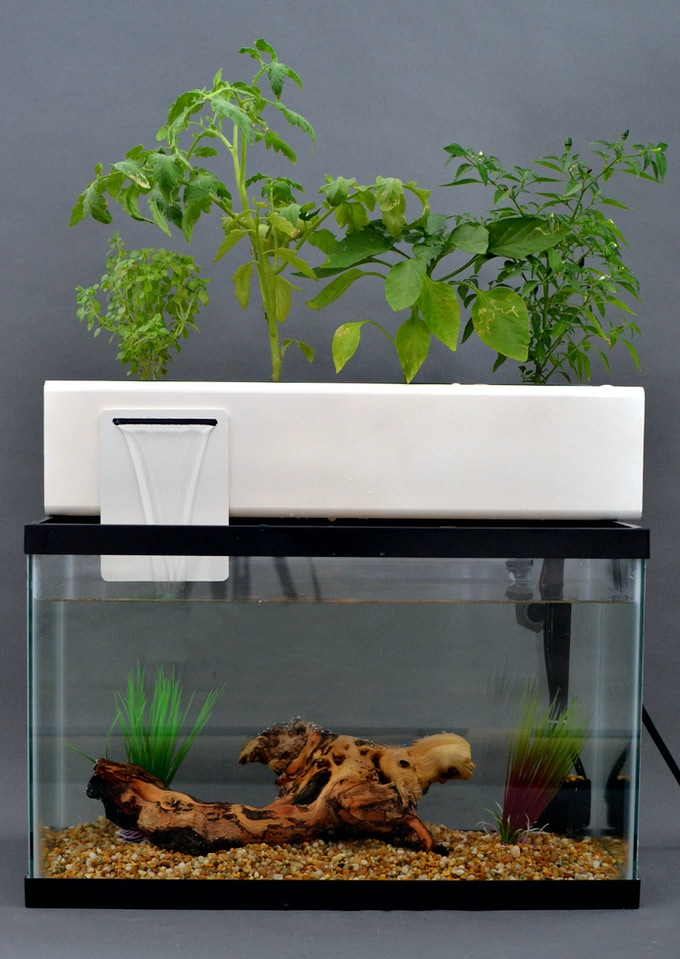 The blue green box by andrew de melo kickstarter for Filtre petit aquarium