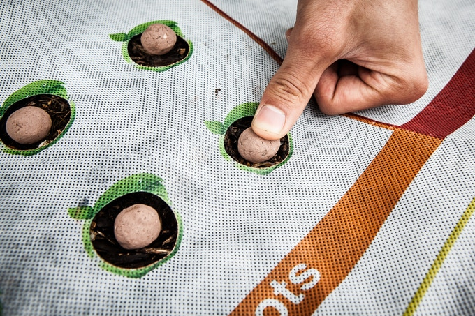Seedballs don't require digging or tilling the soil. They are packed with multiple seeds and nutrients for efficient growth.