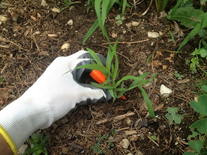 Ring weeder the intuitive way to weed your garden by vincent suozzi kickstarter - Weeding garden make work easier ...