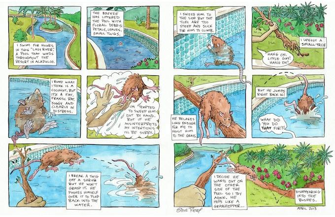 Acapulco Rat. Watercolor.