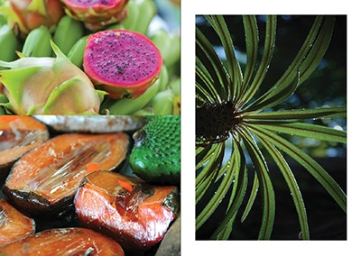 Fruit and flora, Saucy Issue 6: Movement