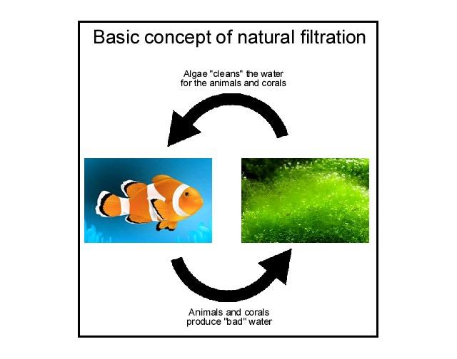 Basic concept of natural filtration
