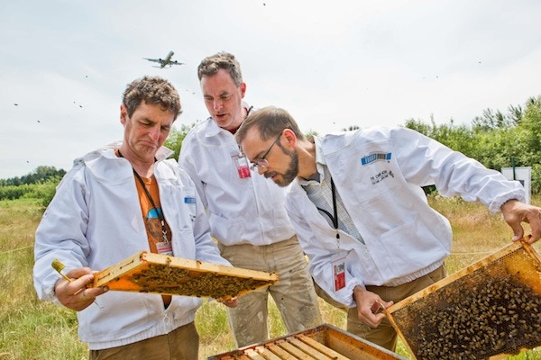 Our airport beekeepers are raising local, disease-resistant queens.