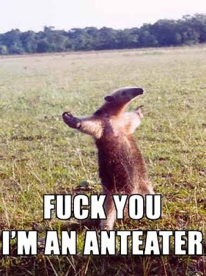 This anteater is pissed that people keep saying he looks like a dick.