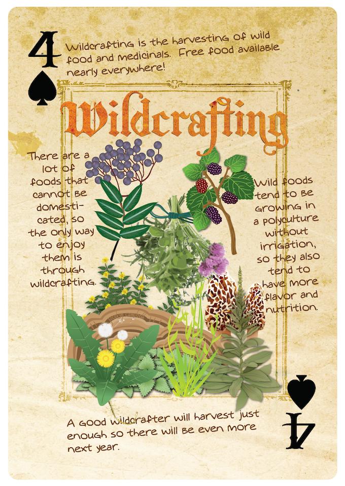 wildcrafting card