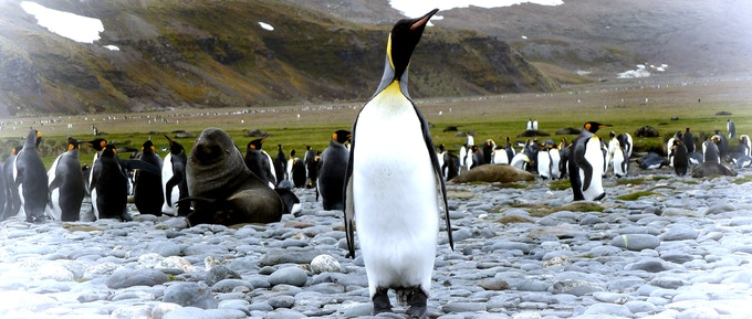 Penguins who change their food and nesting grounds are thriving as their environment warms.