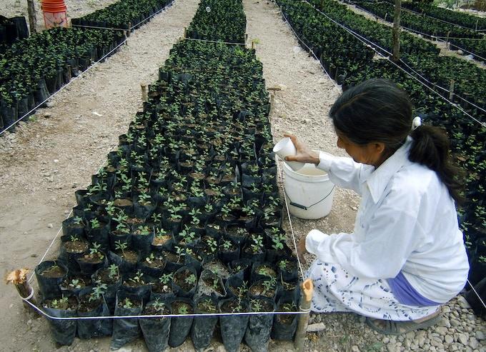 Florencia working in Vivero Esperanza de Zamachihue - Hope Nursery