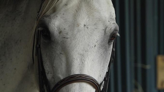 An OTTB at the Thoroughbred Horse Show